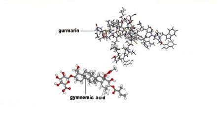 Molecola gymnemic,Gymnema Sylvestre